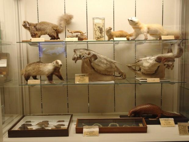 写真:動物標本