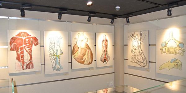 解剖学教育掛図