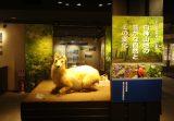 弘前大学資料館第16回企画展「白神山地の豊かな自然とその変化」を開催